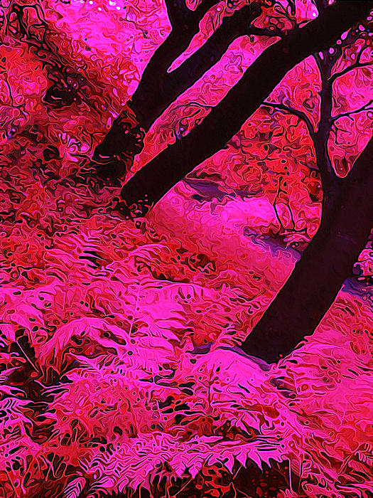 Infrared Fern Garden Print by Bill Caldwell -        ABeautifulSky Photography