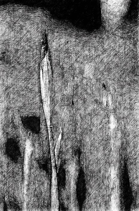 Ink Iris Print by Yevgeni Kacnelson