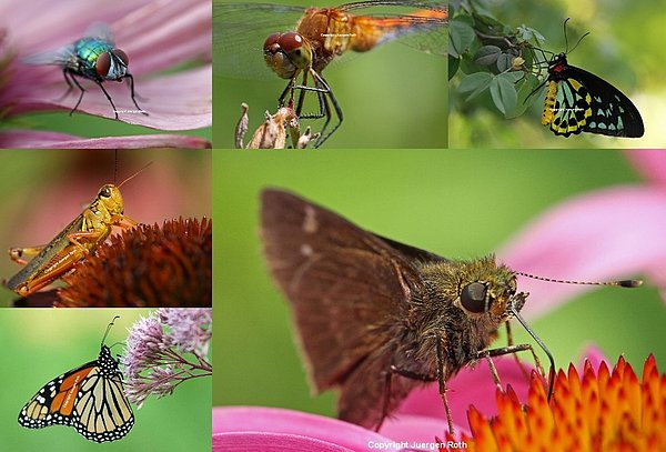 Insect Macro Photography Art Print by Juergen Roth