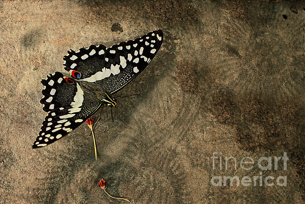 Insect Study Number 30 Print by Floyd Menezes
