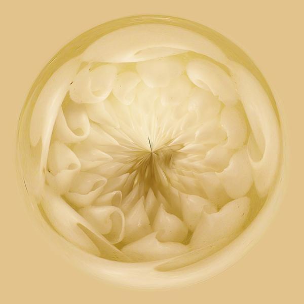 Inside A Sea Shell Orb Print by Paulette Thomas