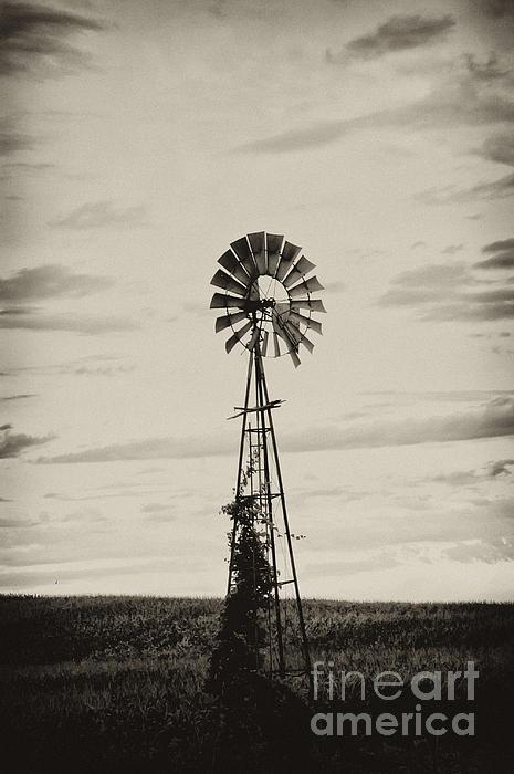 Iowa Windmill In A Corn Field Print by Wilma  Birdwell
