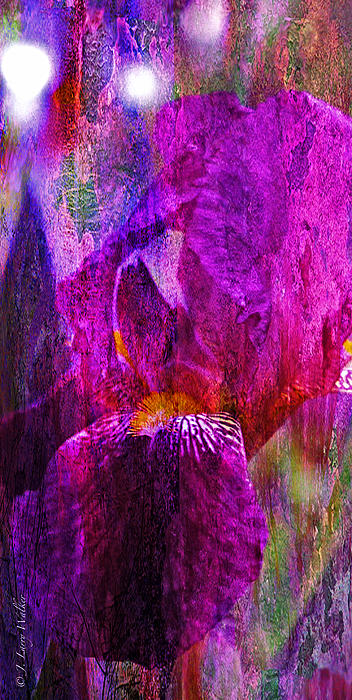 Iris Abstract Print by J Larry Walker