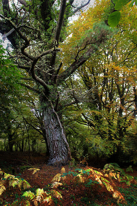 Is That Treebeard? Print by Mark Callanan