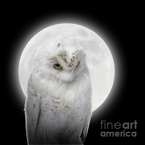 Isolated White Owl In Night With Moon Print by Angela Waye