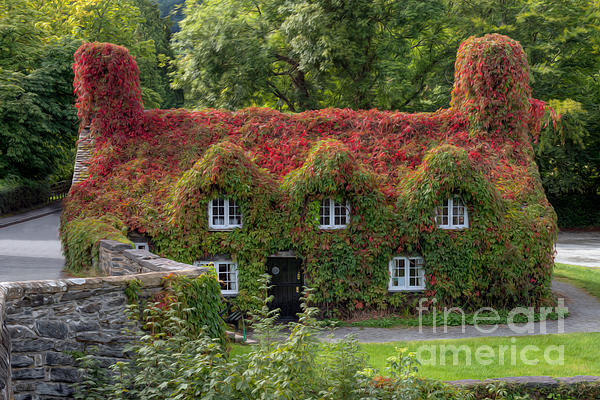 Ivy Cottage Print by Adrian Evans