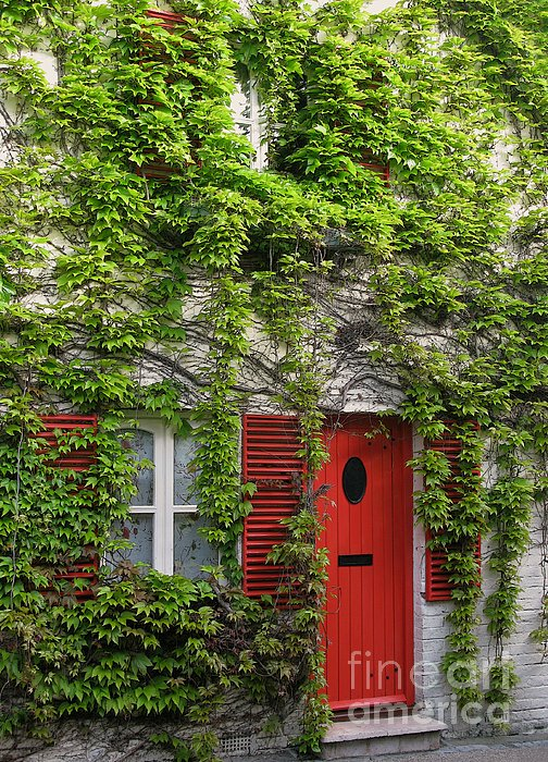 Ivy Cottage Print by Ann Horn