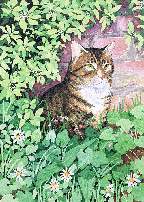 Jackie 39 s cat by suzanne bailey for Garden designs by jacqueline
