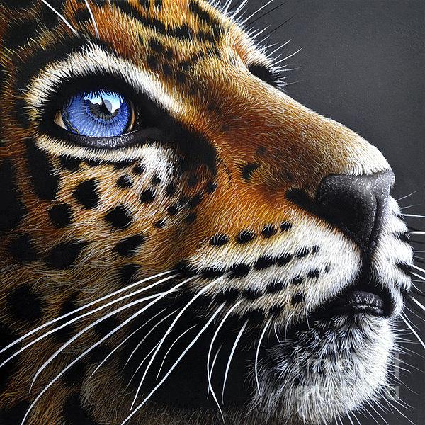 Jaguar Cub Print by Jurek Zamoyski