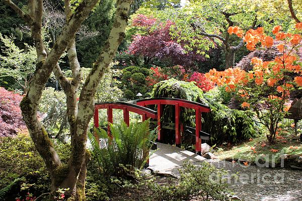 Japanese Garden Bridge With Rhododendrons Print by Carol Groenen