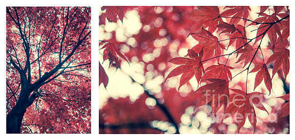 Japanese Maple Collage Print by Hannes Cmarits