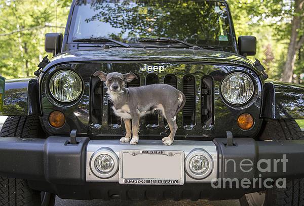 Jeep Dog Print by Edward Fielding