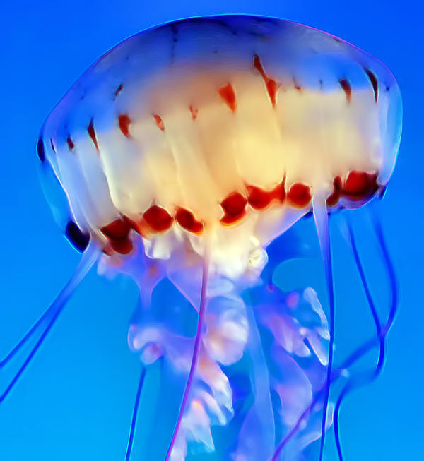 Jellyfish 3 Print by Dawn Eshelman