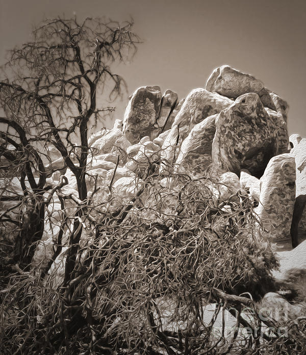 Joshua Tree - 07 Print by Gregory Dyer