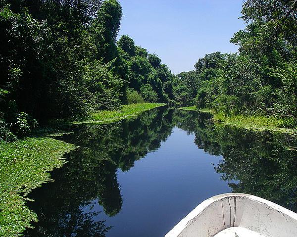 Journey Into A Green Paradise Of Mangroves Cuero Y Salado Wildlife Preserve La Ceiba Honduras Print by Robert Ford