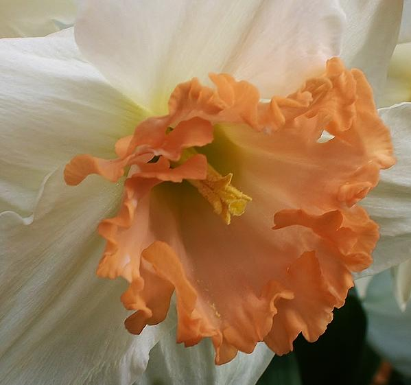 Joy Of Spring Print by Bruce Bley