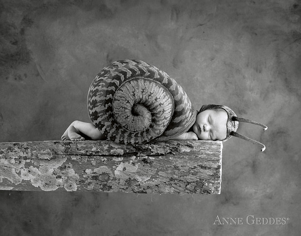 Julia Snail Print by Anne Geddes