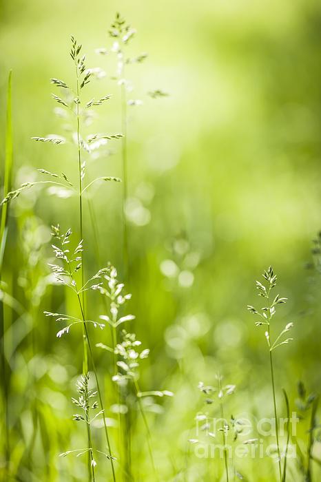 June Green Grass  Print by Elena Elisseeva