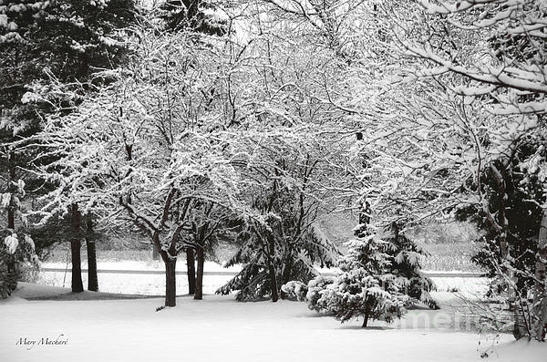 Just After A Snowfall Print by Mary Machare