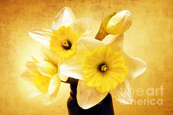 Just Plain Daffy 1 - Flora - Spring - Daffodil - Narcissus - Jonquil Print by Andee Design