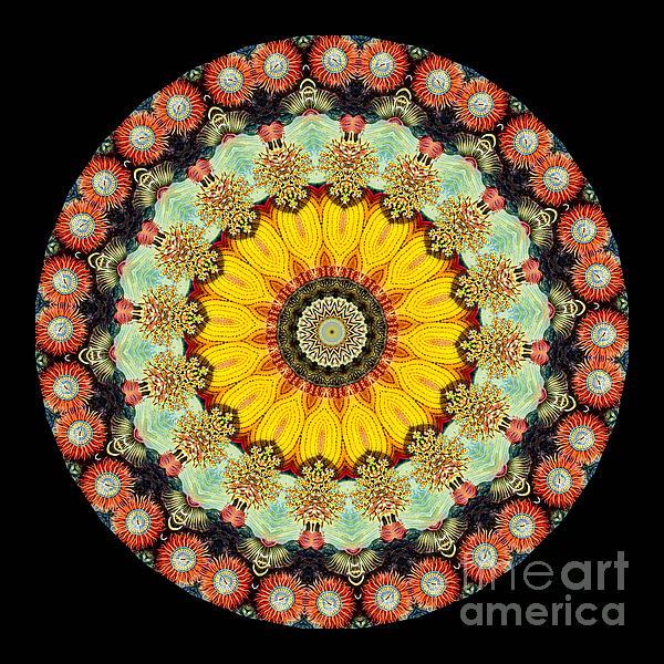 Kaleidoscope Ernst Haeckl Sea Life Series Print by Amy Cicconi
