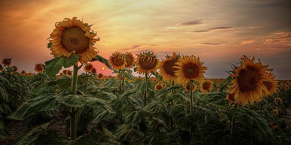Thomas Zimmerman - Kansas Van Gogh