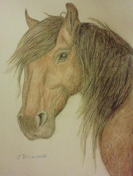 Kathy's Horse Print by Christy Brammer