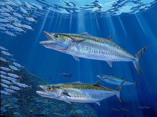 Kingfish Reef Print by Carey Chen