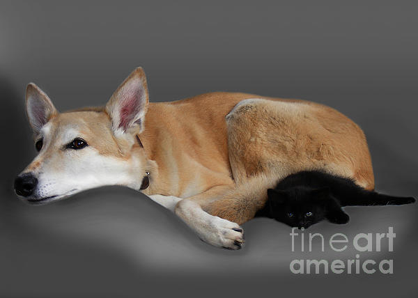 Kitten And Canine Print by Linsey Williams
