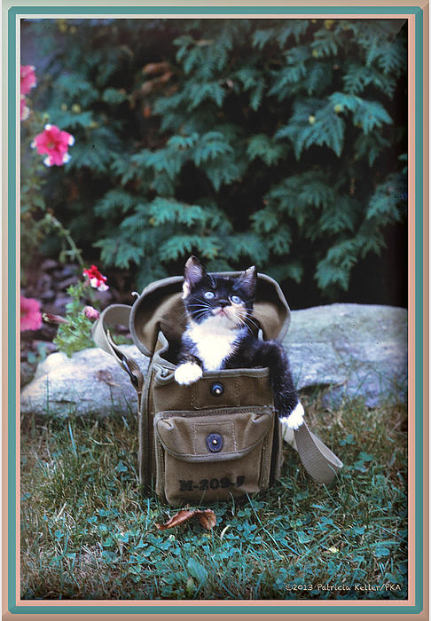 Kitten In A Canvas Bag Print by Patricia Keller