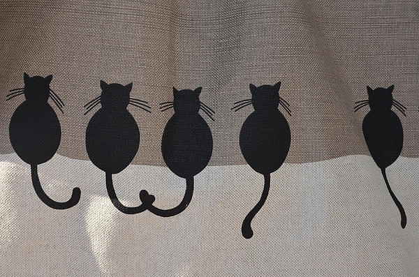 Kitten In A Row Print by Dany  Lison