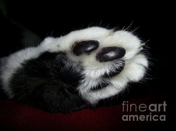 Kitty Toe Beans Print by Heather L Giltner