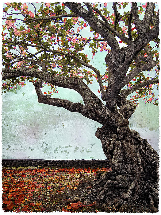 Knotted Tree Print by Daniel Hagerman