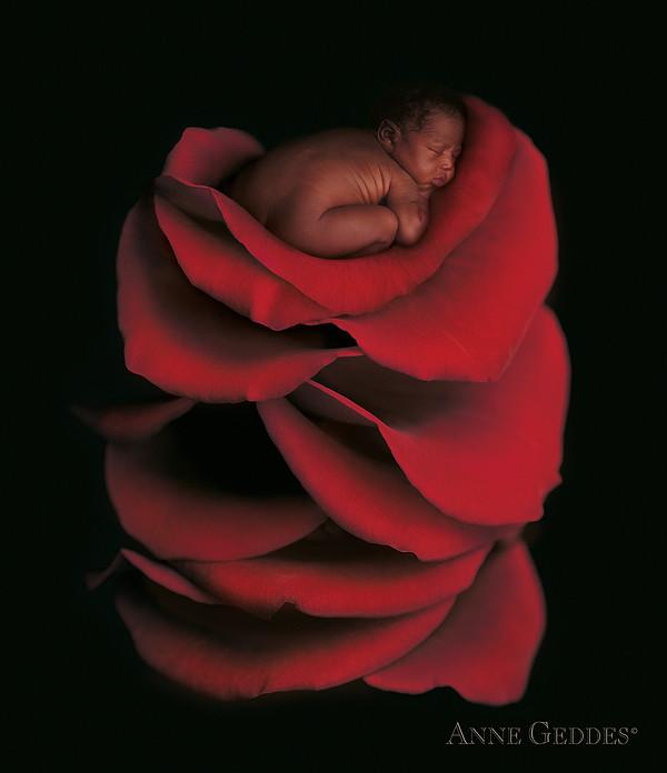 Kwasi In Rose Print by Anne Geddes