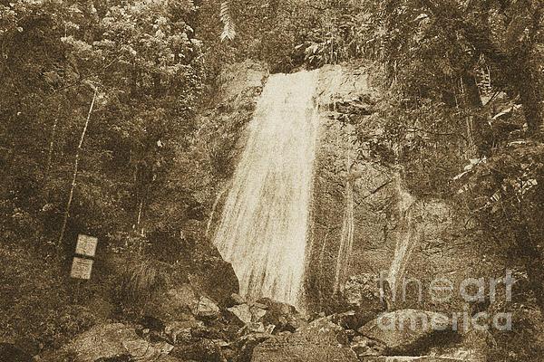 La Coca Falls El Yunque National Rainforest Puerto Rico Print Vintage Print by Shawn O'Brien