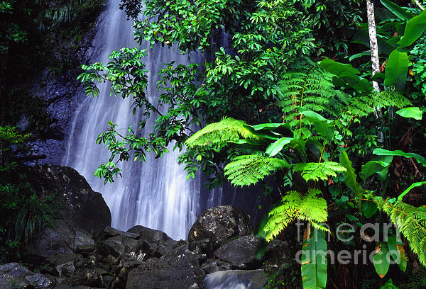 La Coca Falls Print by Thomas R Fletcher