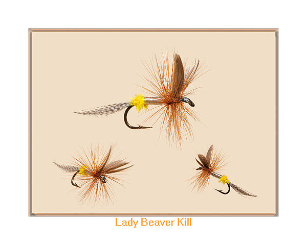 Lady Beaver Kill II Print by Neal Blizzard