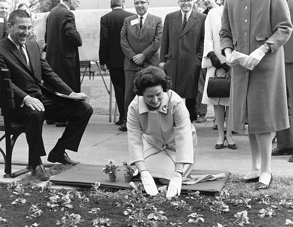 Lady Bird Johnson Planting Print by Underwood Archives