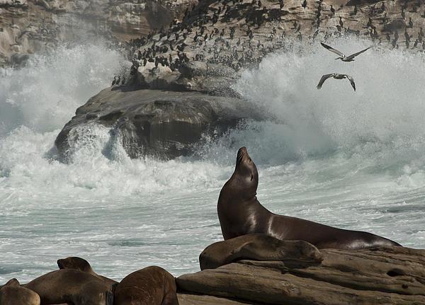 Daniel Hebard - LaJolla Surf n Nature Preserve
