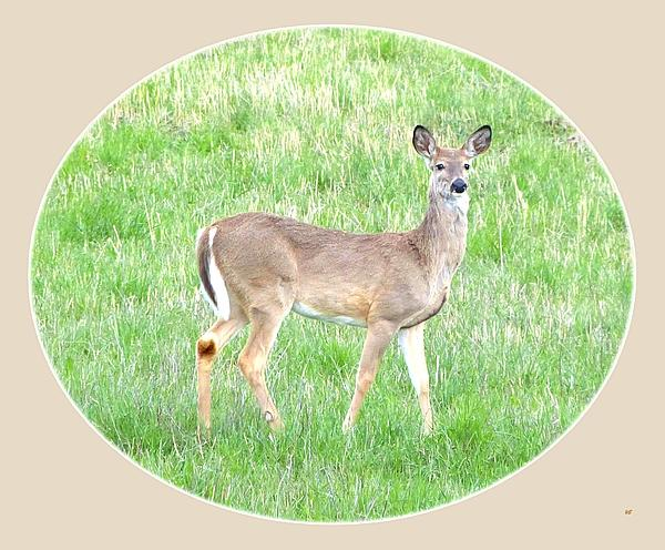 Lake Country Doe   Print by Will Borden