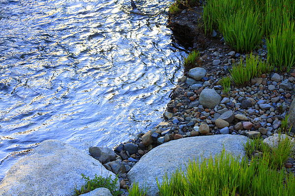 Lake Tahoe River's Edge Print by Anne Barkley