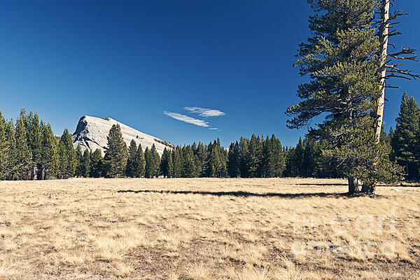 Lambert Dome In Yosemite National Park Print by Justin Paget