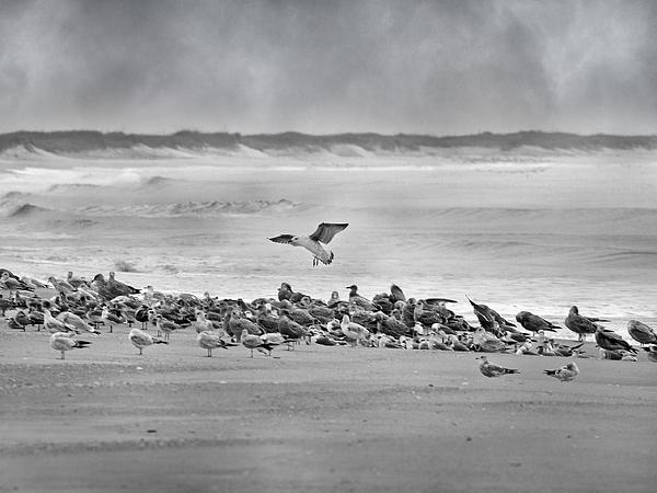 Landing In A Blur Print by Betsy C  Knapp