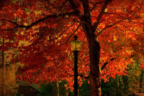 Lantern In Autumn Print by Susanne Van Hulst