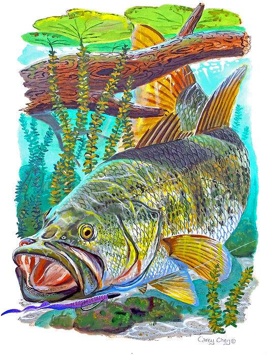 Largemouth Bass Print by Carey Chen