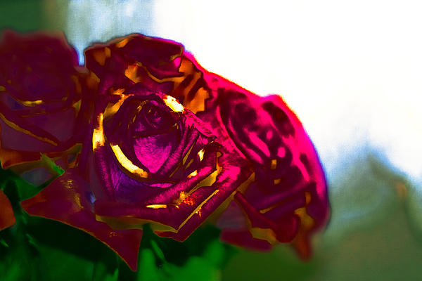 Last Light In The Life Of A Rose Bouquet  Print by Michelle J Sergi