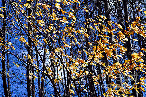 Late Fall Print by Elena Elisseeva