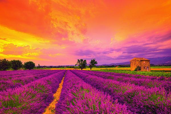 Lavender Sunset Print by Midori Chan