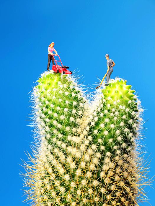 Lawn Mowing On Cactus Print by Paul Ge
