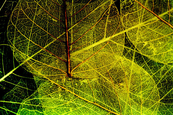Layers Of Leaves Print by Bonnie Bruno